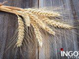 grain's futures