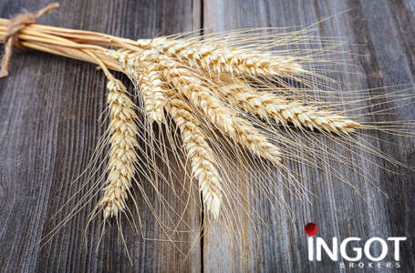 Grain futures closed Wednesday's trading session in the red territory except Soybean futures as it rose to finish the session up.