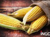 corn FX